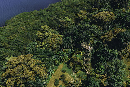 Bocas Canopy Observation Tower